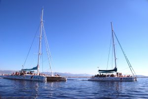 Catamarans tour en Mallorca taiti 75 and 60